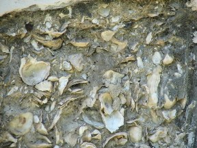 Tabby (oyster shells, lime, ash, sand and water) was used in construction during the colonial period.