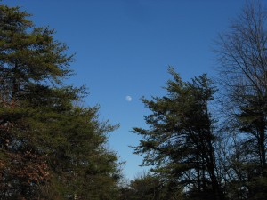 The moon in a blue sky at Fall Creek Falls State Park, Tennessee.  January 8, 2009.
