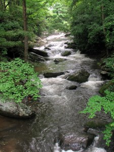 Twentymile Creek, Great Smoky Mountains, NC.  June 22, 2009.