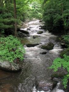 Twentymile Creek, Great Smoky Mountains, NC.  June 22, 2009.