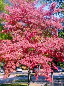Barren River State Park, Kentucky.  October 7, 2001.