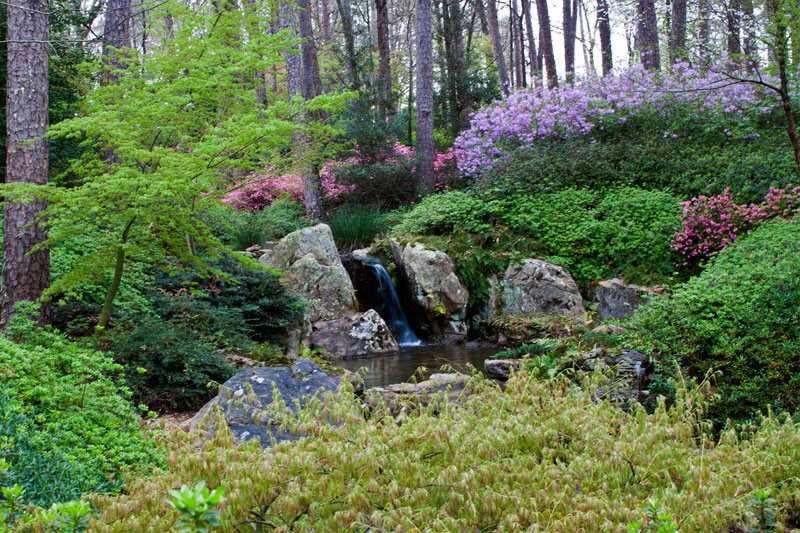 Watery Wednesday 134 Garvan Gardens Senior Moments