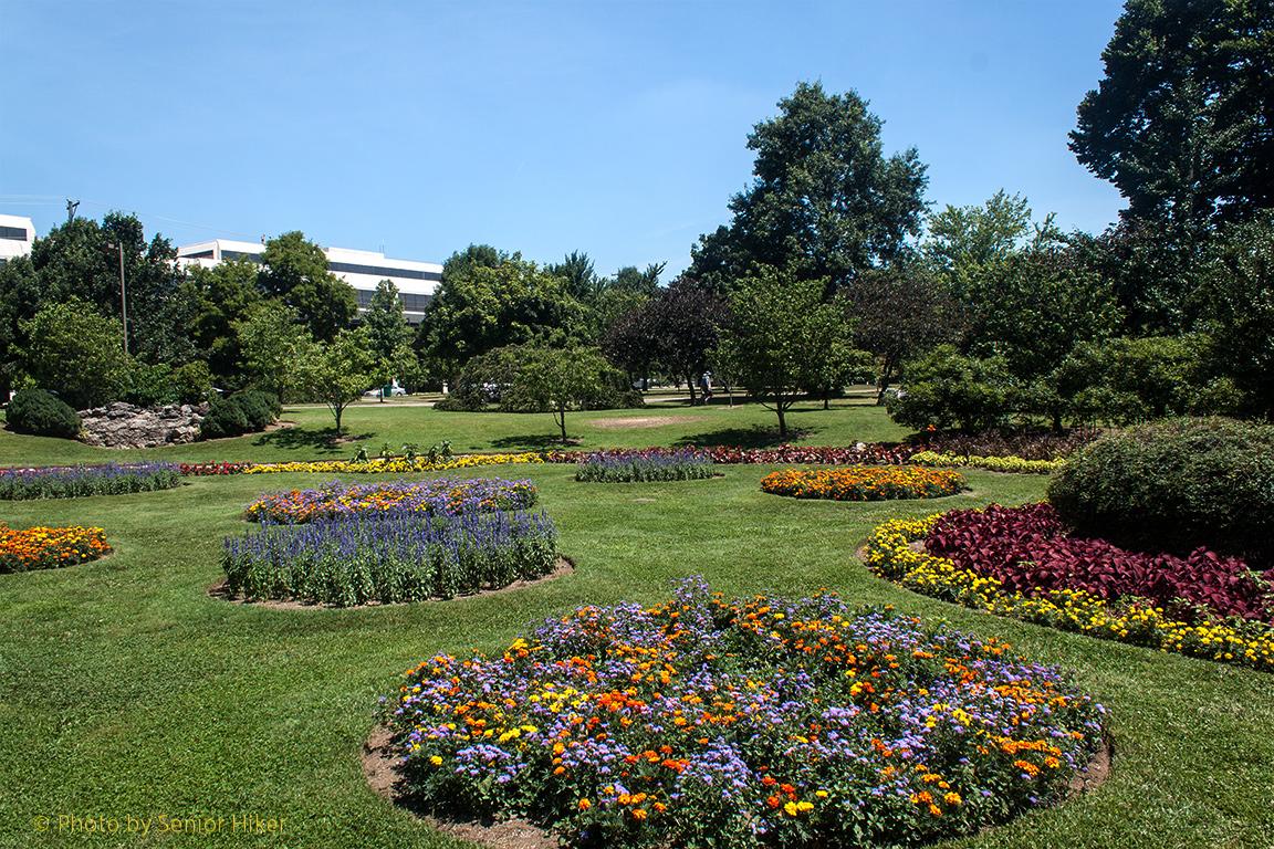 Marigolds Shade Our World Centennial Park Senior Moments