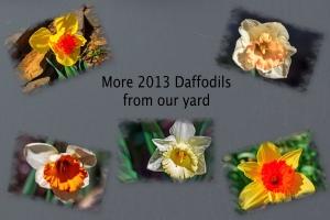 2013 -- Daffodils II