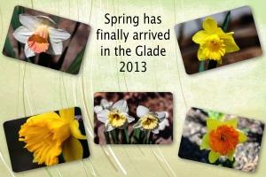 2013 -- Daffodils
