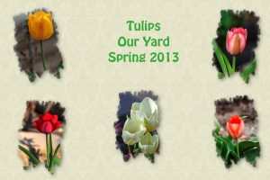 2013 -- Tulips