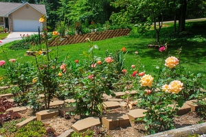 Our 'big' rose bed, with the new wall flower bed in the background.  Fairfield Glade, Tennessee.  June 1, 2013.