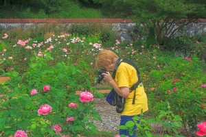 Betsy in the Rose Garden, Biltmore House and Gardens, Asheville, North Carolina.  August 6, 2013.