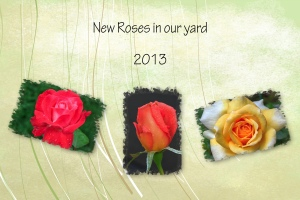 2013 -- New Roses