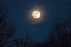 A full moon over Fairfield Glade, Tennessee.  December 16, 2013.