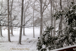 Our back yard in the snowstorm, Fairfield Glade, Tennessee.  January 21, 2014.