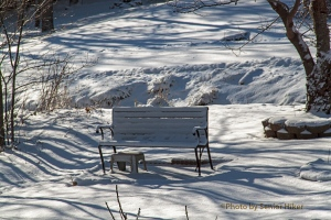 The cold and lonely bench in our front yard, Fairfield Glade, January 6, 2014.