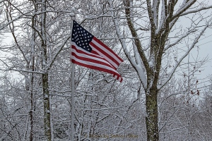 The Stars and Stripes in our front yard.  January 21, 2014.