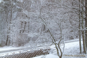 The view in front of our house, Fairfield Glade, Tennessee.  January 21, 2014.