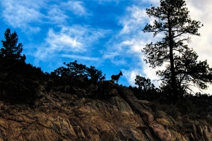 'King of the Mountain' in Big Thompson Canyon, Colorado.  September 17, 2012.