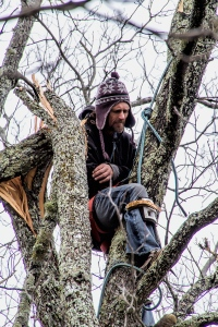 A closer look at the man in the tree.  March 2, 2015.