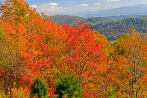 Trees showing off their vibrant colors along the Foothills Parkway.  October 23, 2015.